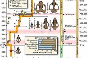 美国科罗拉多州化石显示6600万年前小行星撞击后地球上的生命是如何复苏的