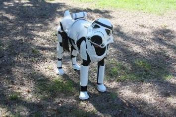 美国杜宾犬穿上《星球大战》帝国冲锋队士兵战服