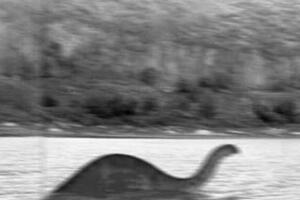 1981年刚果恐龙照片曝光,有人在非洲拍摄到活着的恐龙