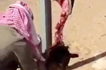 茹毛饮血:沙特阿拉伯猎人生吞血淋淋狼肉