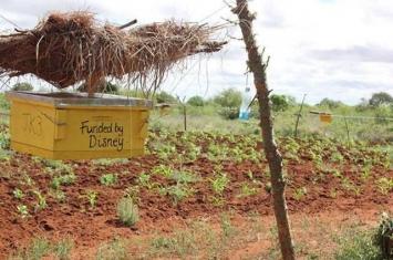 动物学家新方法将蜂窝作为天然屏障防止大象群破坏农田